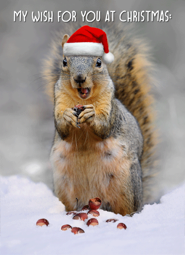 Squirrel In Snow Funny Christmas Card Christmas Wishes  Hope you're not freezing your nuts off! | Merry Christmas wish nut funny animal squirrel   Hope you're not freezing your nuts off!