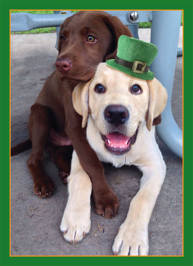 St. Patrick's Hug Funny St. Patrick's Day   Dog's hugging each other while wearing a St. Patrick's Day hat| hug day love warm loving dog dogs lab labrador big St. Patrick's Day Patrick green  Sending you a Big Loving St. Patrick's Day Hug!