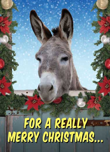 Horse cards christmas funny cards free postage included take ass out funny horse card christmas take your ass out and get yourself something solutioingenieria Images