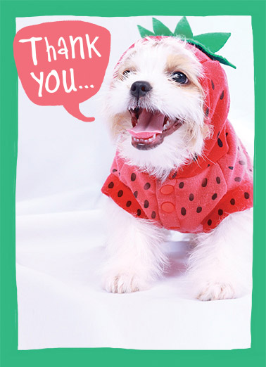 Thank You Funny Dogs Card  dog puppy photo costume thanks thank you strawberry dog puppy cute fun smile happy   berry much!