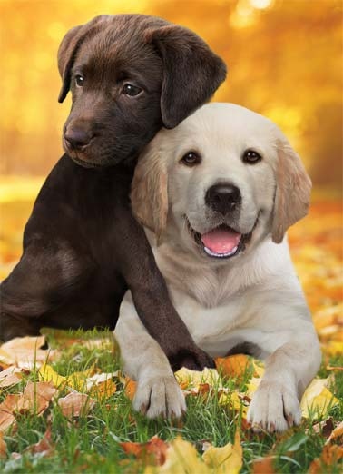 Thanksgiving Hug Dogs Funny Thanksgiving Card  A picture of two puppies together in the grass hugging each other. | fall winter thanksgiving leaves leaf dog chocolate give share turkey hug big loving grass smile cute Sending you a big, loving, thanksgiving hug