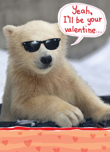 Funny Valentine's Day Card Love A cool polar bear wearing sunglasses says he will be your valentine | sunglasses polar bear cool animal valentine valentine's day heart hearts zoo animal handle heart hearts love , if you think you can handle this much cool