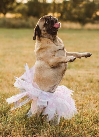 Tutu TY Funny Dogs Card Sweet Picture of a dog wearing a tutu. | dog wear wearing thank you tutu wonderful worlds stand pug  You're tutu wonderful for words!