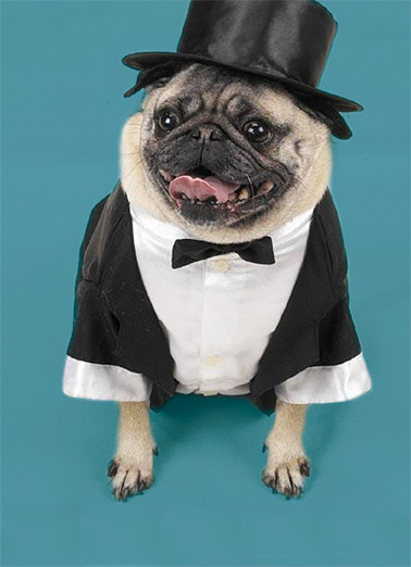 Tuxedo Pug Funny Father's Day Card Funny Animals