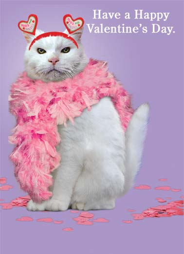 Valentine Cat Funny Valentine's Day Card For Anyone   Don't let my humiliation and shame be in vain.