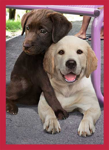 Valentine's Day Hug Funny Valentine's Day Card  Two dogs hugging each other for valentine's day. | dog valentine valentine's day hug big loving   Sending you a Big Loving Valentine's Day Hug!
