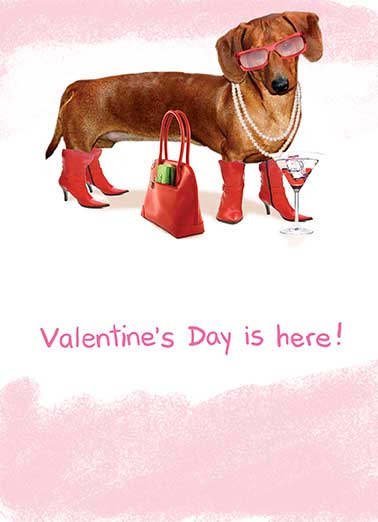 Valentine's Day is Here Funny Valentine's Day Card Dogs Dog is all dressed up in human accessories | dog sunglasses heart hearts hot hotdog purse boots drink drinks martini necklace glasses   Hot Dog!