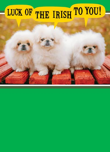 Warm Fuzzy St. Patrick's Day Funny Dogs Card  Cute Dogs wishing you a Happy St. Patrick's Day | paddy, patty, saint, green, irish, luck, dog, doggy, doggies, puppy, puppies, pup, Send you a few warm fuzzies on St. Patrick's Day!