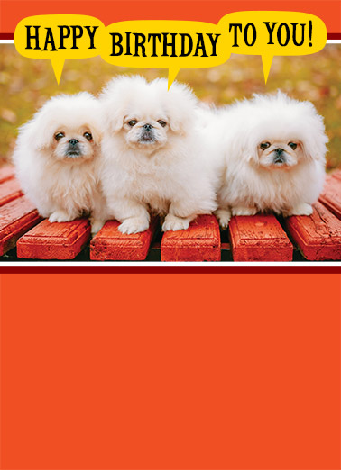 Funny Birthday Card Dogs ,  Sending you a few warm fuzzies on your Birthday.