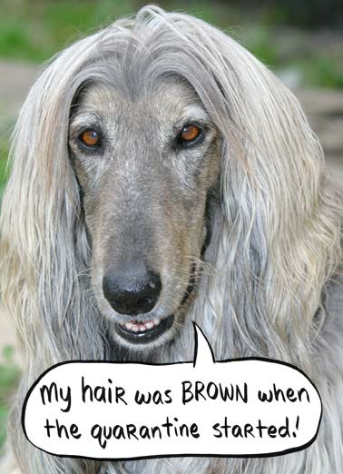 Was Brown Funny Birthday Card Dogs A picture of a dog with gray hair saying that their hair was brown before the quarantine. | quarantine gray hair was brown dog best friend happy birthday new normal dye coronavirus covid-19 fever flu shelter at home place roots Here's to aging GRAYS-fully!