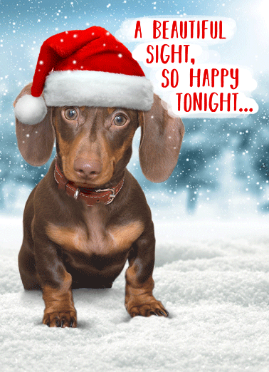 Weiner Wonderland Funny Christmas Card   Walking in a Weiner Wonderland | Merry Christmas dachshund dog wiener funny snow happy holidays santa hat humor   Walking in a Weiner Wonderland.