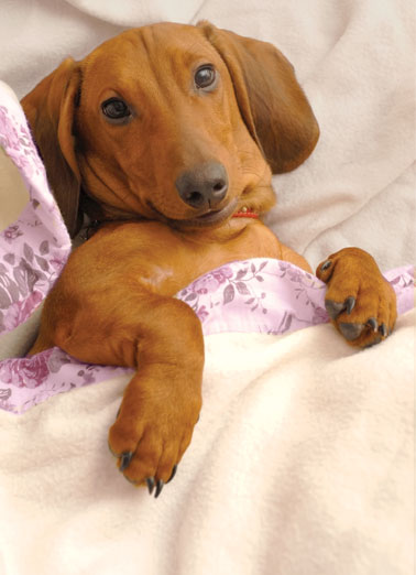 Weinerful MD Funny Dogs Card Mother's Day A picture of a dog lying under bed sheets. | dog sleep picture lying mom mother mother's day wish wishes bed  Warmest wishes for the most WEINERFUL Mother's Day ever!