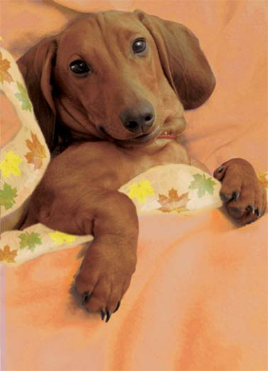 Wienerful Thanks Funny Thanksgiving Card  Cute Dachshund Thanksgiving Photo | dog, breed, thanksgiving, wiener, dox, fall, autumn, warmth, holiday Warmest wishes for the most WIENERFUL Thanksgiving ever!