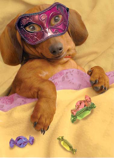 Wienerful Funny Halloween Card  A dog wearing a halloween mask in bed with a lot of candy. | halloween candy sweets mask dog costume scary sweet bed sheet sheets sleep Warmest wishes for the most WIENERFUL Halloween ever!