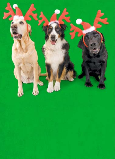 Woof Funny Christmas Card Christmas Wishes Three dogs wearing antlers and santa hats. | dog Santa hat antlers reindeer woof merry Christmas happy new year We Woof you a Merry Christmas!