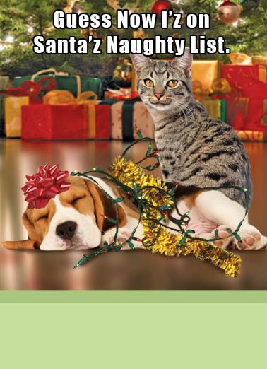 Funny Christmas   Cat pranks dog by wrapping him in lights | cat dog lights christmas presents tied bound wrap tree funny fun naughty santa list worth , Totally Worth It.