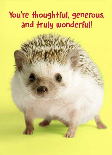 Funny Thank You Card  Your Good points, hedgehog, badger, porcupine, cute, animals, funny, thanks, thank you, sweet, critter, pets, fun, appreciation, kids, wonderful, generous, thoughtful, a few, And those are just a few of your Good Points. Thank You