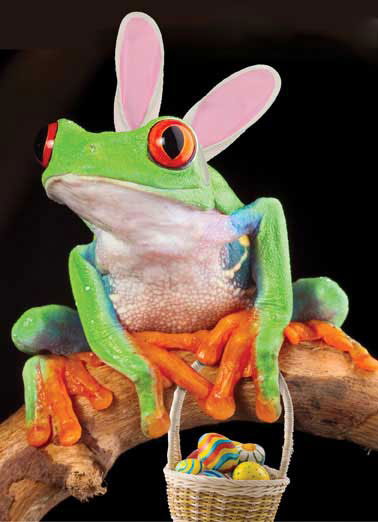Easter Ribbit Funny Easter  Funny Tree frog wearing bunny ears and easter basket | rabbit, candy, funny, joke, laugh, happy, lol, meme, haha, ha, toad, amphibian,  Look! It's the Easter Ribbit!